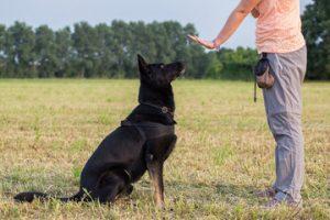 addestramento cani torino